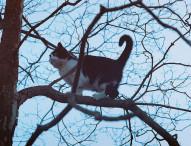 On sauve un chat !